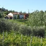 Photo of Il Cigliere