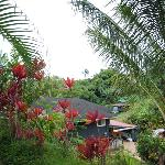 View of neighbors from the edge of the lanai.