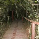 walk way to the tree house