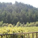 Backdrop of vineyard view