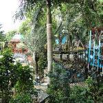 View from Treetanic