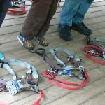 Harnesses!!!
