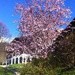 Frühling Rehlegg