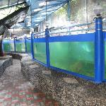 Large fish tank.