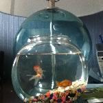 """Pet"" goldfish for the kids"