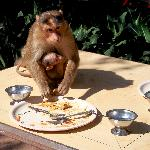 monkey on our dining table near the pool
