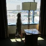 enjoying another beautiful day in Vegas