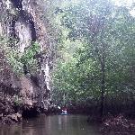 Entre mangrove et canyon