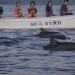 Close encounter with live dolphins