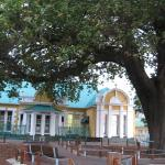 Old Slave Tree