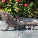 iguana afuera del restaurant