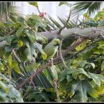 Parakeet, taken from room 262