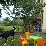 Io e la casa con il mio cane felice di stare all'aria aperto