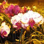 Still more orchids.