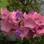 OT's Flowers
