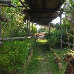 pretty communal walkways and gardens