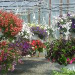 A view of inside our greenhouse.