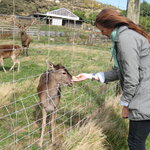 Feeding the deer with Kim from Melbourne