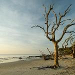 Jekyll Island Trees on Beach