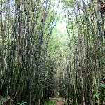 Entering the bamboo zone