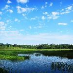 Heron Marsh