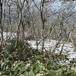 上蒜山への縦走路付近の残雪