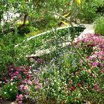 """Monet"" gardens in Jodhpur"