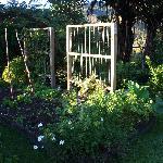 Veggie garden at Lyons Lakestay