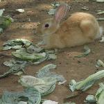 You can feed a Rabbit