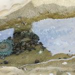sea anemones in a small pool