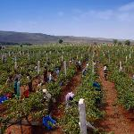 Grover Zampa Vineyards