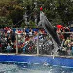 Moscow Dolphinarium