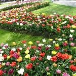 Keukenhof Gardens, near Amsterdam, the best place for tulips and spring bulbs
