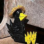 Cute crow :)