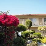 中庭を囲む客室 様々な花や植物が癒されます