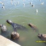 lobos marinhos e gaivotas