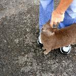 Haley Farm cat