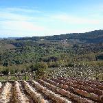 Chianti countryside.