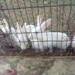 Rabbits at the Park