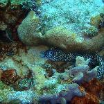 Coral en Sand Andres Isla