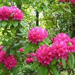 Flowers in the Arboretum