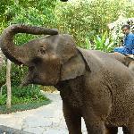 Elephants greet you