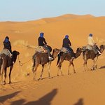 the camel trip