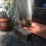 the cutest cat ever in Villa Arabella