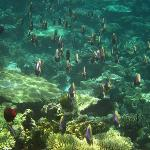 turtle point snorkelling