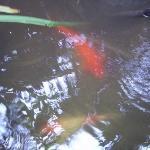 Fische gibt es in jedem kleinen Teich