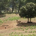 Reserva de la Sierra de Cazorla