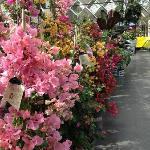 Exotic indoor plants