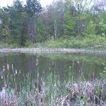 The wildlife refuge pond is near the woodland walk.