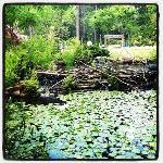 Mercer Arboretum & Botanic Gardens